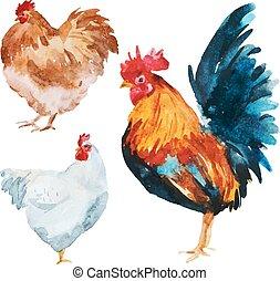 Pollo acuarela