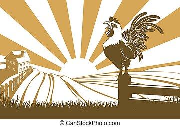 Pollo de granja cacareando al amanecer