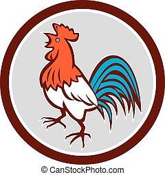 Pollo gallo cacareando mirando el círculo retro