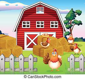 Pollos en la granja cerca del establo rojo