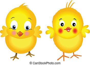 polluelos, amarillo