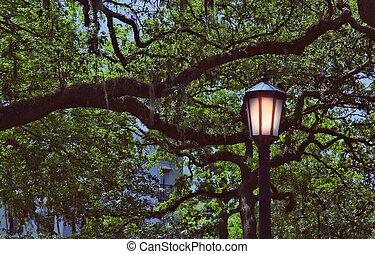 Polvo en el parque Savannah