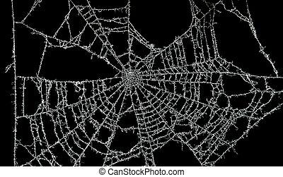 polvoriento, tela, araña
