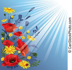 Poppies y margaritas