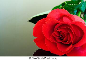 prístino, rosa