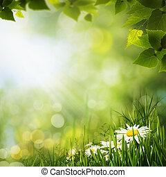 Pradera verde con flores de margarita, fondo natural para tu diseño
