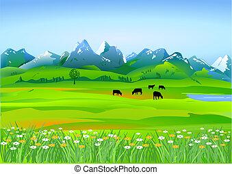 praderas, alpino