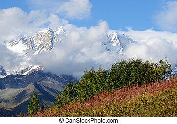 praderas, montaña, alpino, svaneti, superior, paisaje, zona