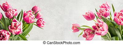 Primavera. Banner de tulipán rosa en blanco clásico. Espacio para el texto.