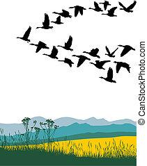 primavera, emigrar, gansos