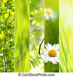 primavera, estacional, collage