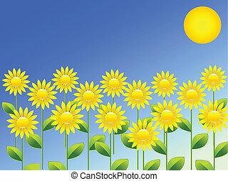 primavera, girasoles, plano de fondo