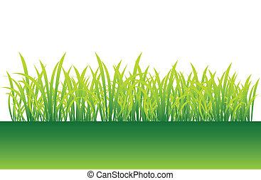 Primavera, hierba verde para tu diseño