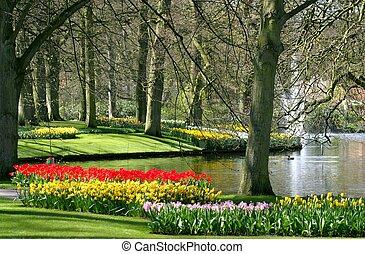 primavera, parque, tiempo