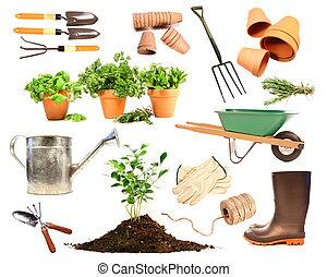 primavera, plantación, blanco, objetos, variedad