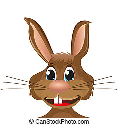 primer plano, conejo