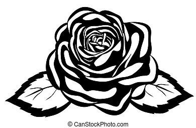 primer plano, resumen, rose., aislado, fondo negro, blanco