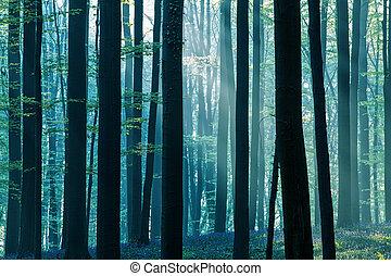 Primera luz del sol en un bosque primaveral