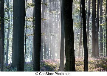 Primera luz solar en un bosque de primavera cubierto de campanillas