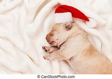 Primera Navidad para un cachorro recién nacido