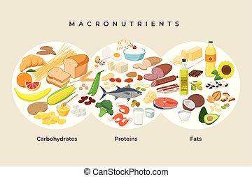 proteínas, haciendo dieta, -, elements., macro, macronutrients., ilustración, concept., vector, plano, alimentos, comida, diseño, sano, comparación, iconos, alimento, carbohidratos, isolated., grasas, principal, infographic, grupos