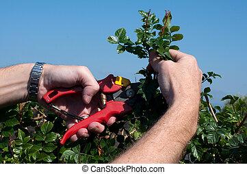 Pruebe los arbustos