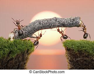 puente, construir, encima, hormigas, agua, equipo, salida del sol