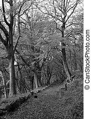 puente cubierto, imagen, monocromo, musgo, senda, hojas, piedras, otoño, luego, colden, bosque, árboles, valle, oscuridad, contra, hebden
