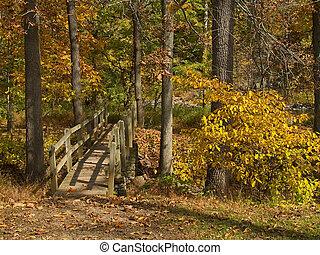 Puente de mando en el bosque