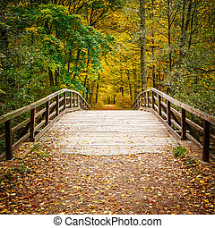 Puente en el bosque de otoño