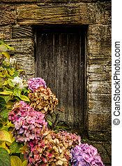 Puertas de madera antiguas y hortensias