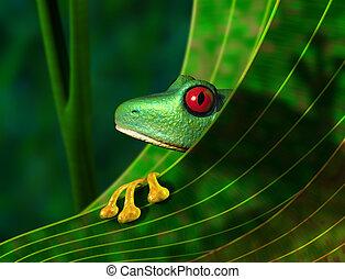 puesto peligro, rana de árbol, rainforest