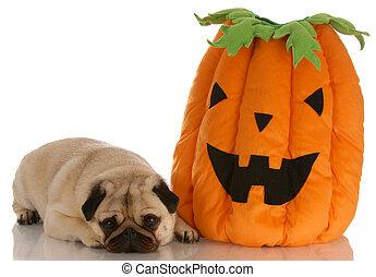 Pug tirado al lado de la calabaza de Halloween en blanco fondo
