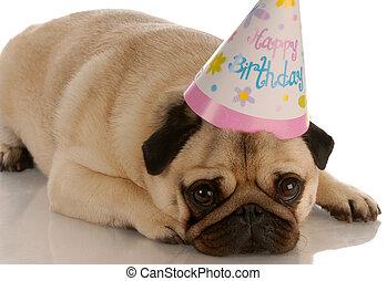Pug tumbado con sombrero de cumpleaños en blanco