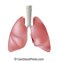 pulmón humano, eps8