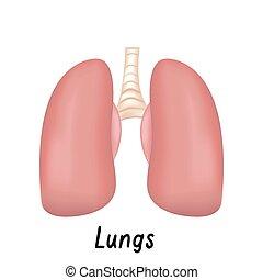 Pulmones órganos internos, ilustración del vector de anatomía humano