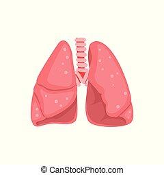 Pulmones humanos, vector de anatomía interna vector de la ilustración de un fondo blanco