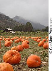 Pumpkin parche vertical