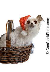 Pup de Navidad