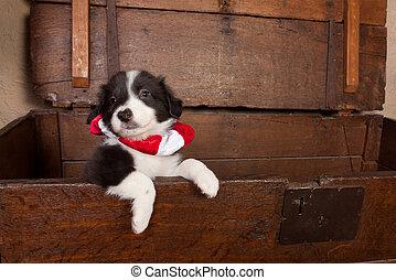 Puppy con Navidad