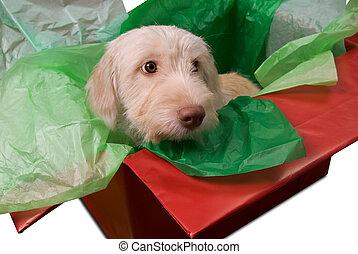 Puppy en caja de regalos