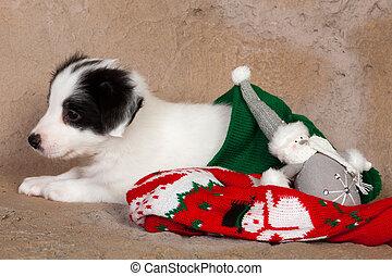 Puppy en las medias de Navidad