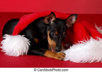 Puppy masticando sombrero de Santa