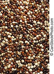Quinoa cruda orgánica colorida