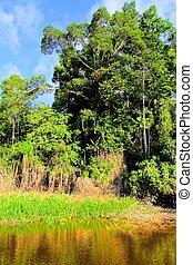 Río Amazona. Imagen de HDR