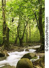 río, bosque, verde