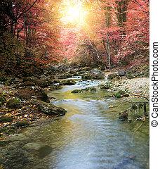 Río en el bosque de otoño