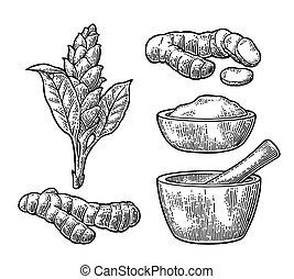 raíz, flor, mortar., polvo, mano de mortero, cúrcuma