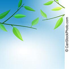 Rama árbol con hojas verdes