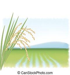 rama, maduro, campo, vector, rice., arroz, illustration.